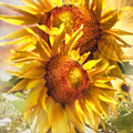 Sunflower Light by Debra and Dave Vanderlaan