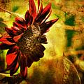 Sunflower by Lois Bryan