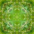 Sunflower Mandala by Susan Bloom