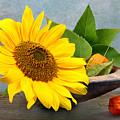 Sunflower by Manfred Lutzius