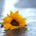 Sunflower by Martine Vail