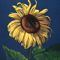 Sunflower by Melissa Joyfully