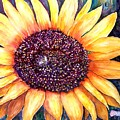 Sunflower Of Georgia by Norma Boeckler