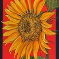 Da153 Sunflower On Red By Daniel Adams by Daniel Adams