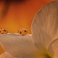 Sunflower On White Flower by Gabriel Jardim