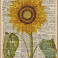 Sunflower over dictionary page by Anna W
