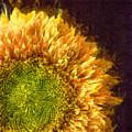 Sunflower Pencil by Edward Fielding