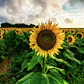 Sunflower People by Alissa Beth Photography