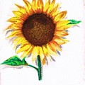 Sunflower by People Collect