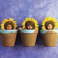 Sunflower Pots by Anne Geddes