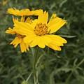 Sunflower Sanctuary  by Brad Hodges