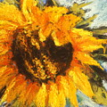 Sunflower by Sherry Jarvis