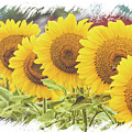 Sunflower Sisters by Eleanor Abramson