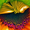 Sunflower Smoothie by Gwyn Newcombe