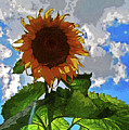 Sunflower Staring You In The Eye by George D Gordon III