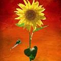 Sunflower Summer  by Mark Taylor