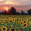 Sunflower Sunset II by Rod Best