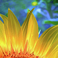 Sunflower Sunshine by Pennie  McCracken