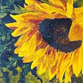 Sunflower by Tami Booher