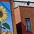 Sunflower Town by Sarah Loft