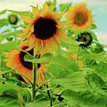 Sunflower Trio by Robert McCulloch