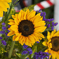 Sunflower Triplets by Kevin  Sherf