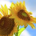 Sunflower Twins by Diana Raquel Sainz