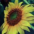 Sunflower by Vanessa GFG
