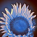 Sunflower Moonlight by William Dey
