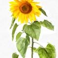 Sunflower Watercolor by Edward Fielding