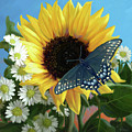 Sunflower With Butterfly by Lucie Bilodeau