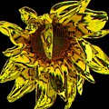 Sunflower With Stone Effect by Rose Santuci-Sofranko