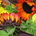 Sunflower2 by Ellen  Leigh