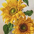 Sunflowers 1 by Fiona Craig