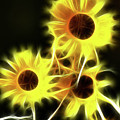 Sunflowers-4955-fractal by Gary Gingrich Galleries