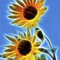 Sunflowers-5246-fractal by Gary Gingrich Galleries