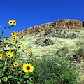 Sunflowers And Cliffs by George Jones