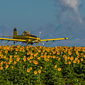 Sunflowers And Crop Duster by Vicki Stansbury