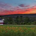 Sunflowers And Sunset by Bill Wakeley