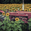 Sunflowers And Tractor by Russell Wooldridge
