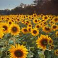 Sunflowers At Sunset by Lori Deiter