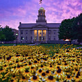 Sunflowers At The Old Capitol by Ben Ford
