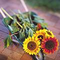 Sunflowers by Robert Ponzoni