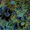 Sunflowers By Wall by David Wimsatt