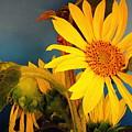 Sunflowers by Camelia C