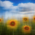 Sunflowers Dreamscape by Debra and Dave Vanderlaan