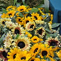 Sunflowers For Sale by Vijay Sharon Govender