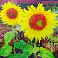Sunflowers by Gina Signore
