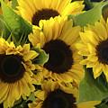 Sunflowers by Henri Irizarri