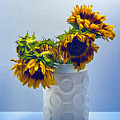 Sunflowers In Circle Vase Blue Tournesols by William Dey
